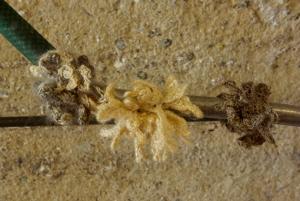 Détail des lichens de J. Autin fait au crochet, installé sur un système de tuyaux.