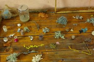 Détail de lichens fait selon la technique du crochet.