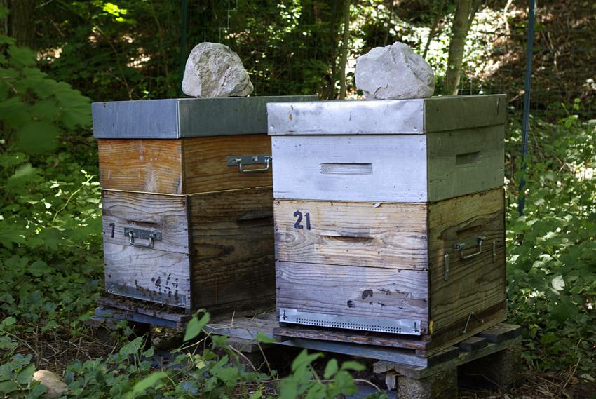 Le petit rucher situé dans le Haut-Livron.