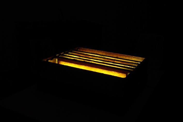installation lumineuse de rayons d'abeilles avec mixage sonore.